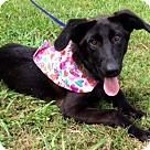 Adopt A Pet :: BEAUTY