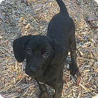 Adopt A Pet :: Wasabi - Nashville, TN