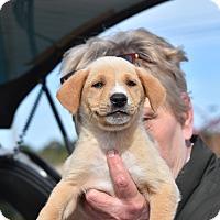 Adopt A Pet :: West - Charlemont, MA