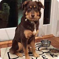 Adopt A Pet :: Happy - Atlanta, GA