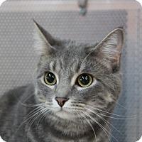 Adopt A Pet :: Bella (frannie) - Sarasota, FL