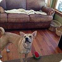 Adopt A Pet :: Jada (fostered in NC) - Cranston, RI
