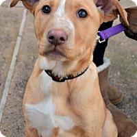 Adopt A Pet :: Jenna - Sunnyvale, CA