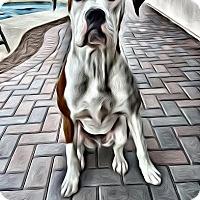 Adopt A Pet :: Luke - pending - Phoenix, AZ
