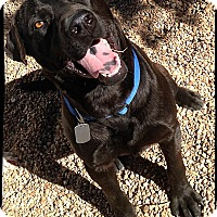 Adopt A Pet :: Odin - Johnson City, TX