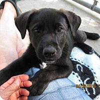 Adopt A Pet :: Gage - Williston Park, NY