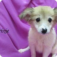 Adopt A Pet :: Delilah - Bartonsville, PA