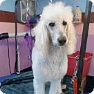 Adopt A Pet :: Rowdy Edwards