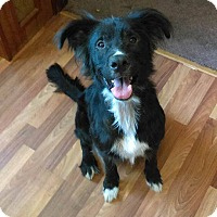 Adopt A Pet :: Dobby - Acushnet, MA