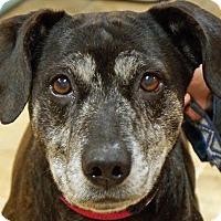 Adopt A Pet :: Cheyenne - Sprakers, NY