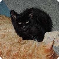 Adopt A Pet :: John - Burlington, WA