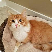 Adopt A Pet :: Bobby Bones - Richmond, VA