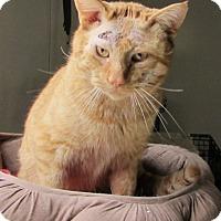 Adopt A Pet :: Knox - Jackson, MO