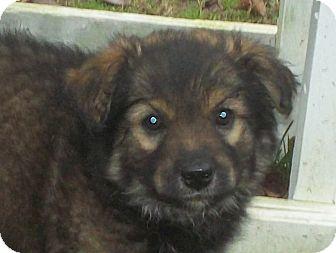 Cumberland Ri Dog Rescue