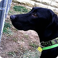 Adopt A Pet :: Slim Jim - Fort Riley, KS