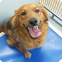 Adopt A Pet :: Spice - Denver, CO