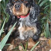 Adopt A Pet :: Edie - Sugarland, TX