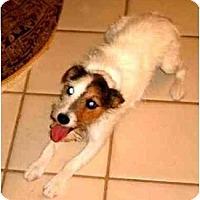 Adopt A Pet :: DULCIE - Phoenix, AZ