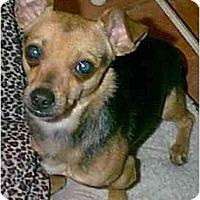 Adopt A Pet :: Tanner - dewey, AZ