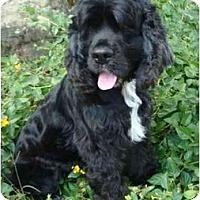 Adopt A Pet :: Ralph - Sugarland, TX