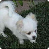 Adopt A Pet :: Chaplin - San Diego County, CA