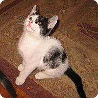 Adopt A Pet :: Lindsey - Colmar, PA