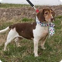 Adopt A Pet :: Tassie - Dumfries, VA
