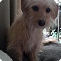 Adopt A Pet :: Maisey - River Falls, WI