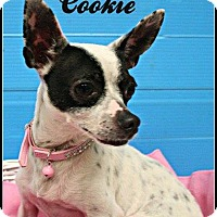 Adopt A Pet :: Cookie - Houston, TX