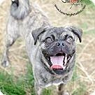 Adopt A Pet :: Iris