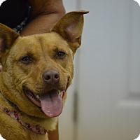 Adopt A Pet :: Montana - Lake Odessa, MI