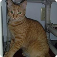 Adopt A Pet :: Avis - Hamburg, NY