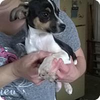 Adopt A Pet :: Little Bear - Daleville, AL