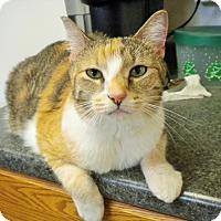 Adopt A Pet :: Kitty - Umatilla, FL