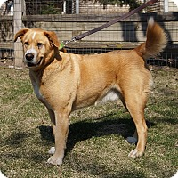 Adopt A Pet :: Charley - Minnetonka, MN