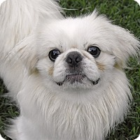 Adopt A Pet :: Peekaboo - PORTLAND, ME