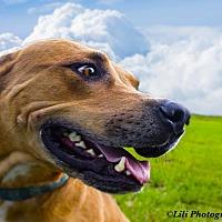 Adopt A Pet :: Rocky - Warner Robins, GA