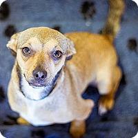 Adopt A Pet :: Athena - Berkeley, CA