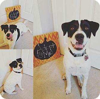 Retriever (Unknown Type) Mix Dog for adoption in Jacksonville, North Carolina - Pixie
