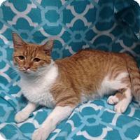 Adopt A Pet :: Simon - Watauga, TX