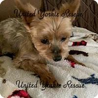 Adopt A Pet :: Jackson - The Village, FL