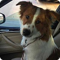Adopt A Pet :: Harry - Denver, CO