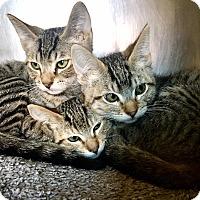 Adopt A Pet :: Ariel, Ursula & Sebastian - Oakdale, CA