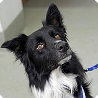 Adopt A Pet :: Monty - Kettering, OH