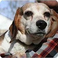 Adopt A Pet :: Reesie Crowe - Waldorf, MD