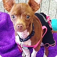 Adopt A Pet :: Trixie - Vista, CA