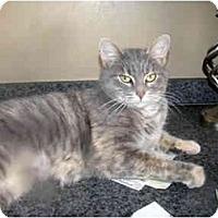 Adopt A Pet :: Carissa - Xenia, OH
