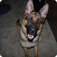 Adopt A Pet :: Lena - Gig Harbor, WA