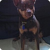 Adopt A Pet :: Reeses - Columbus, OH