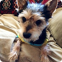 Adopt A Pet :: Pepper(oni) - Los Angeles, CA